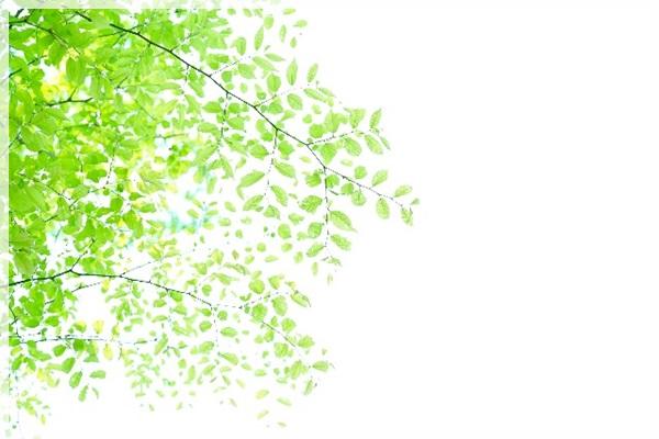 紫外線 木漏れ日